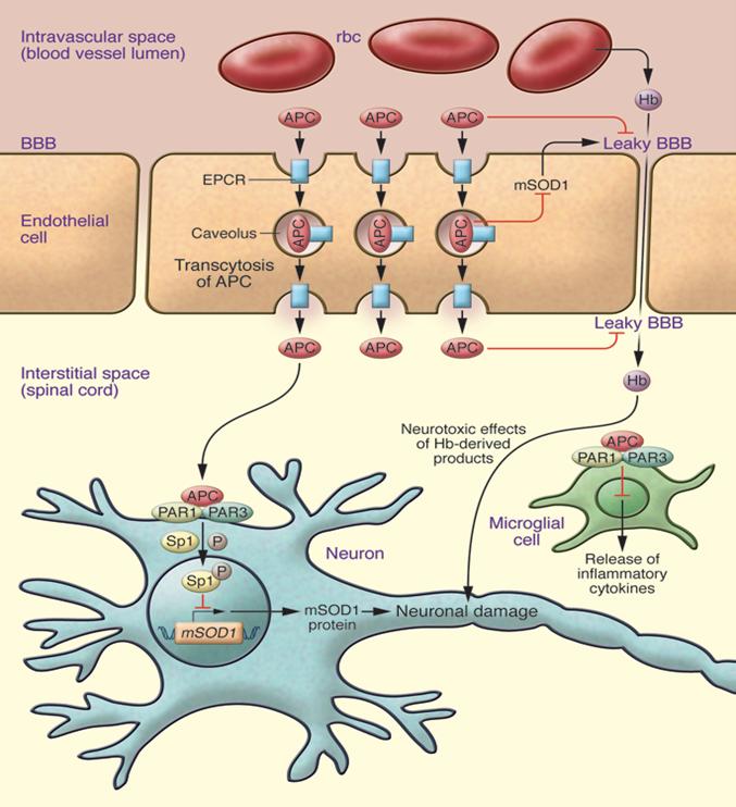ZZ Biotech ALS Program
